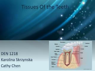 Tissues Of the Teeth