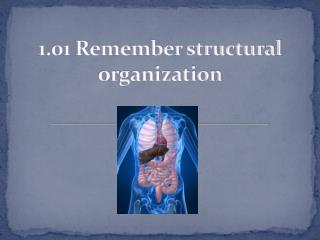 1.01 Remember structural organization