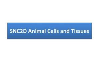 SNC2D Animal Cells and Tissues
