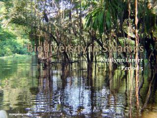 Biodiversity in Swamps