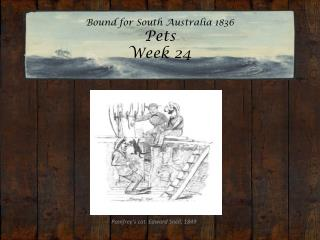 Bound for South Australia 1836 Pets  Week 24