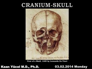 CRANIUM-SKULL