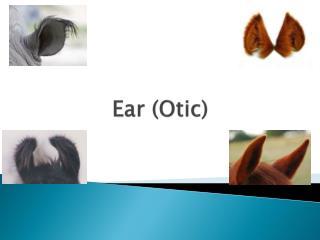 Ear ( Otic )