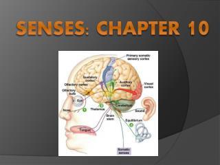 Senses: Chapter  10