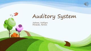 Auditory  System Jackson,  Kaitlynn Miranda,  Fermin