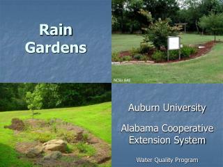 Rain Garden Summary Powerpoint