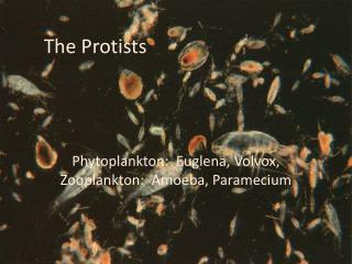 The  Protists