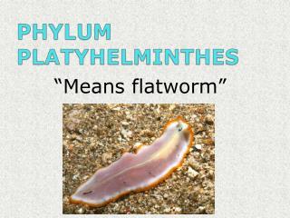 PHYLUM PLATYHELMINTHES