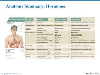 Anatomy Summary: Hormones