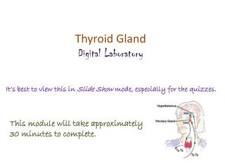 Thyroid Gland Digital Laboratory