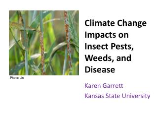 Climate Change Impacts on  Insect Pests , Weeds, and Disease