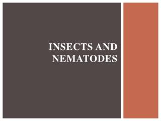 Insects and Nematodes