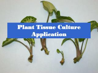 Plant Tissue Culture Application