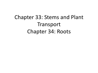 Secondary Growth in Stems