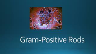 Gram-Positive  Rods