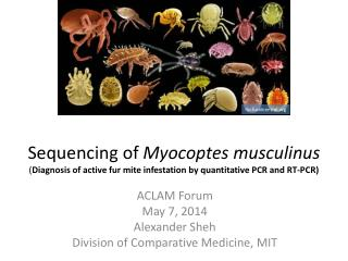 ACLAM Forum May 7, 2014 Alexander Sheh Division of Comparative Medicine, MIT