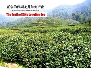 jiangtea china loose tea wholesaler
