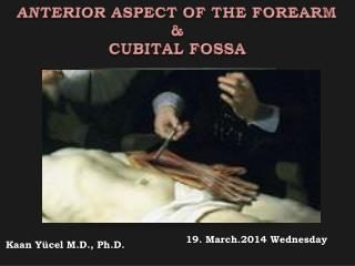 ANTERIOR ASPECT OF THE FOREARM & CUBITAL FOSSA