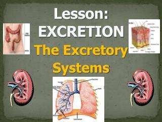 Lesson: EXCRETION