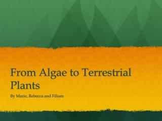 From Algae to Terrestrial Plants