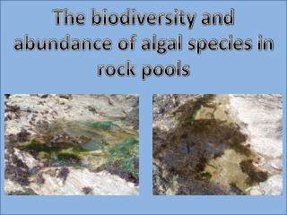 The biodiversity and abundance of algal species in rock pools