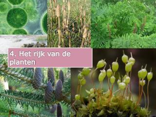 4. Het rijk van de planten