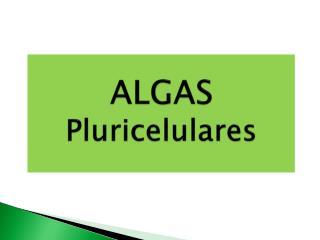 ALG AS Pluricelulares