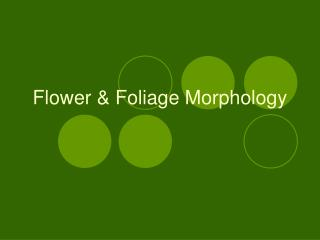 Flower & Foliage Morphology