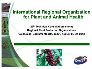 International Regional Organization for Plant and Animal Health