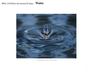 http://bellaonthebeach.files.wordpress.com/2009/01/water.jpg