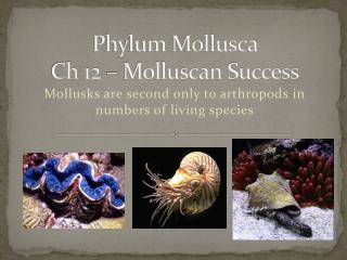 Phylum Mollusca Ch  12 –  Molluscan  Success
