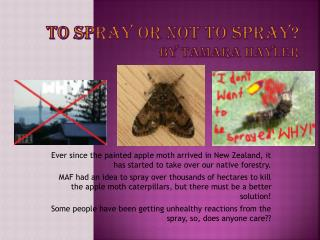 To spray or not to spray? By Tamara  Hayler