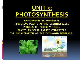 UNIT 5: PHOTOSYNTHESIS