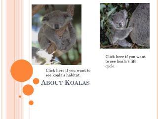 About Koalas