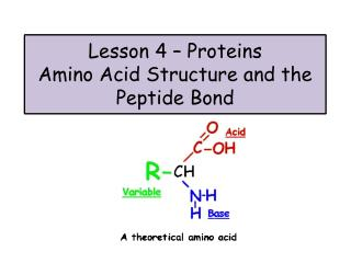 Lesson 4 – Proteins Amino Acid Structure and the Peptide Bond