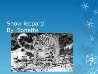 Snow leopard By. Sonette
