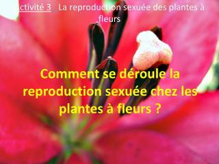 Comment se déroule la  reproduction sexuée  chez les plantes à fleurs?