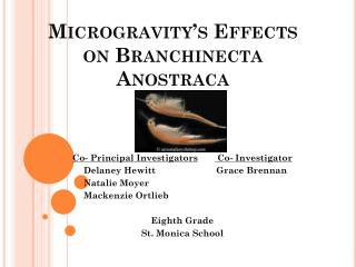 Microgravity's Effects on Branchinecta Anostraca