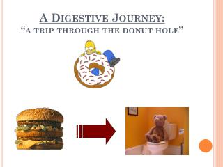 "A Digestive Journey: ""a trip through the donut hole"""