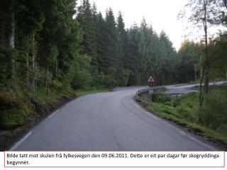 Så tett var  verkeleg  skogen. Bilde tatt mot skulen frå  Eben  Eser den 09.06.2011.