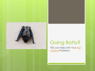 Going Batty? YES can Help with Your Bat Control Problems