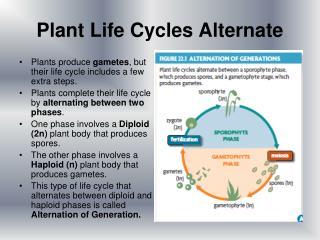 Plant Life Cycles Alternate
