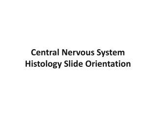 Central Nervous System  Histology Slide  Orientation