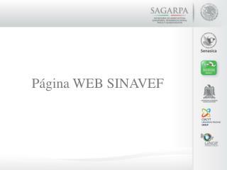 Página WEB SINAVEF