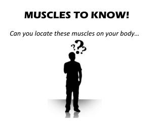 MUSCLES TO KNOW!