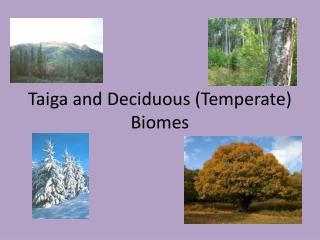 Taiga and Deciduous (Temperate) Biomes