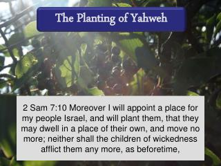 The Planting of Yahweh