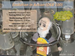 Evolution in Action (OEB 100)