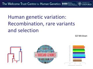 Human genetic variation: Recombination, rare variants and selection