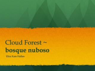 Cloud Forest ~  bosque nuboso